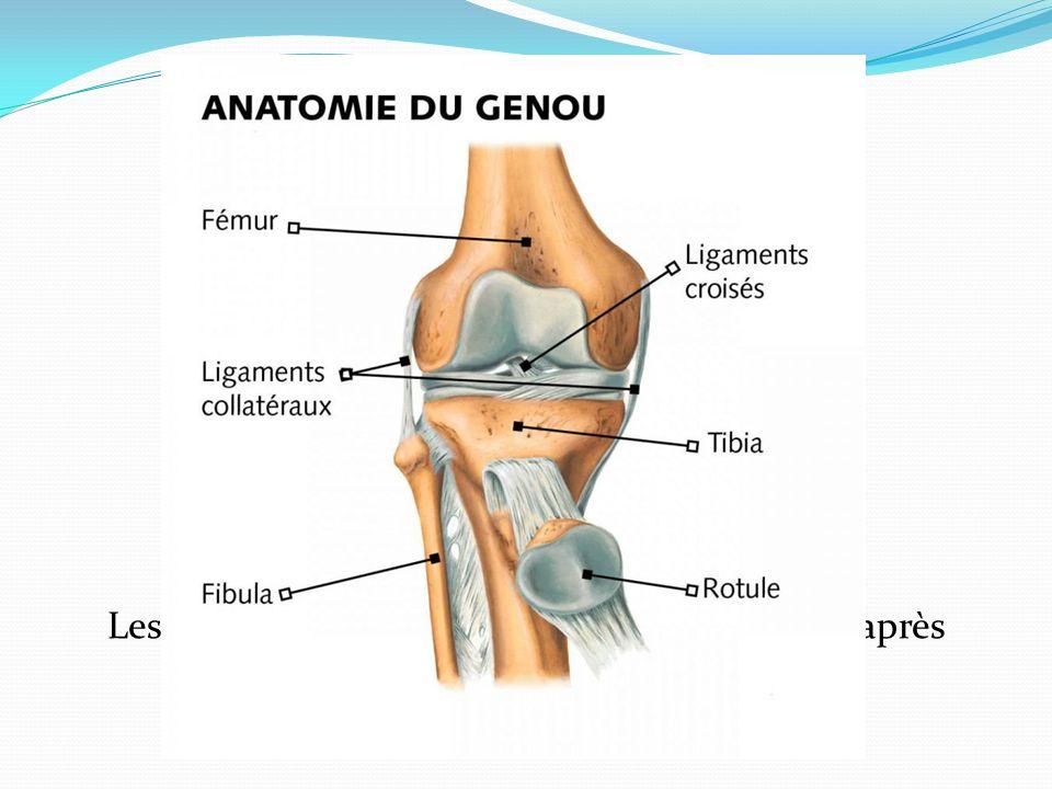 On explore un organe biomécanique Approche mécanique Il faut connaitre lanatomie du genou Les étiologies rhumatismales seront évoquées après éliminati