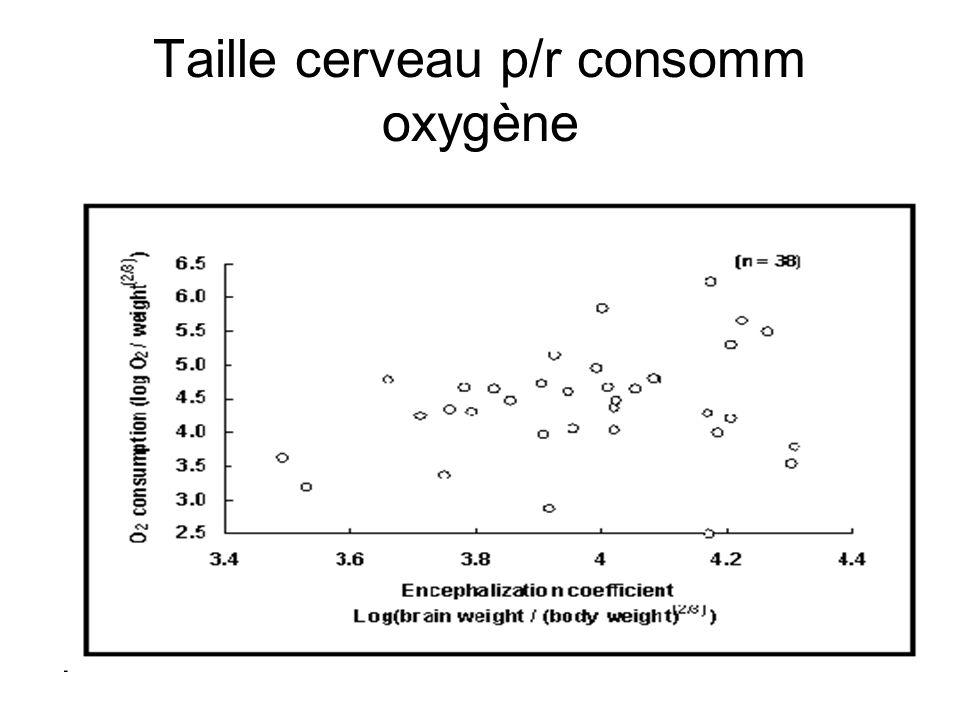 Taille cerveau p/r consomm oxygène