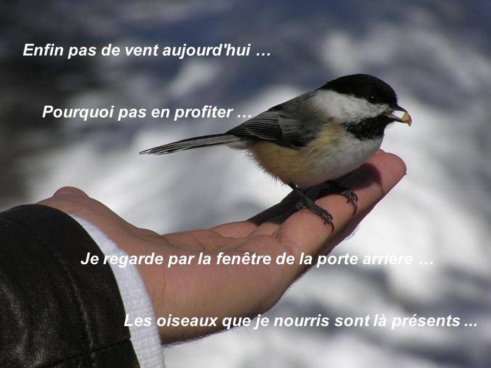 Enfin pas de vent aujourd hui … Pourquoi pas en profiter … Je regarde par la fenêtre de la porte arrière … Les oiseaux que je nourris sont là présents...