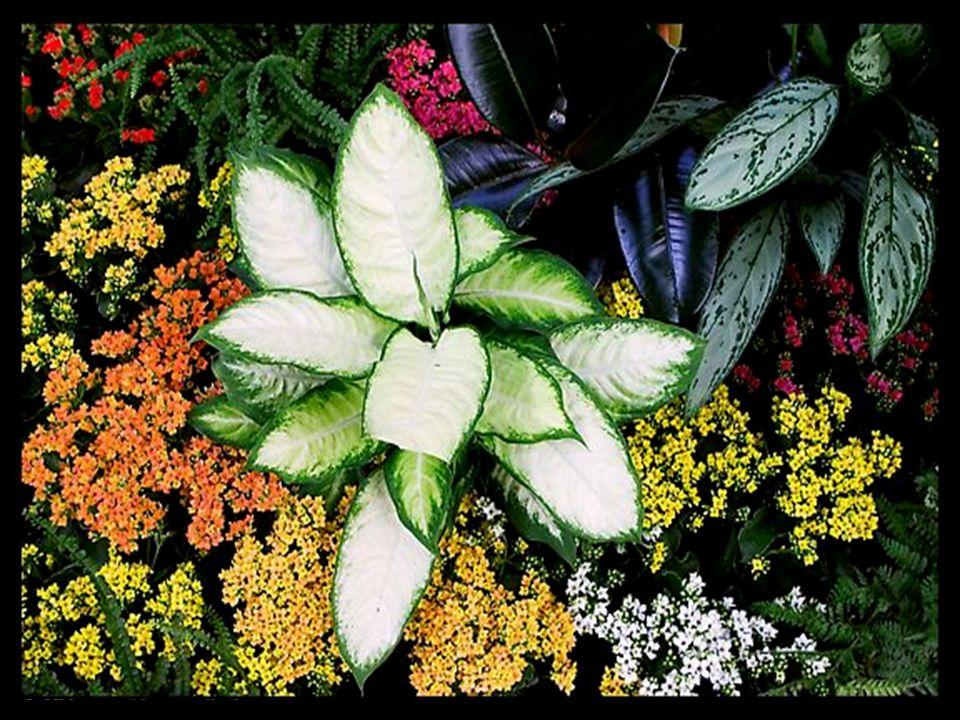 Aujourdhui donc, Seigneur, que ma vie inactive soit un bouquet de fleurs offert à mes amis.