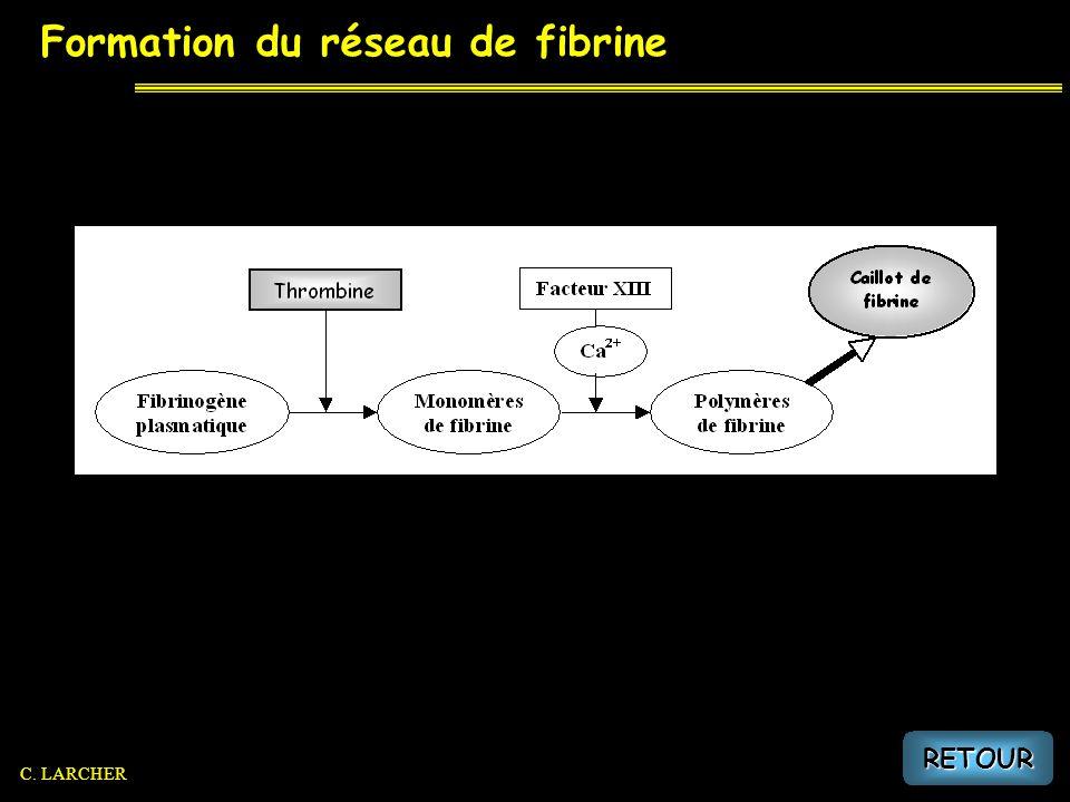 Formation du réseau de fibrine RETOUR C. LARCHER