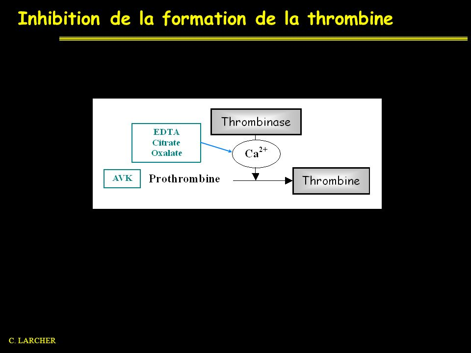 Inhibition de la formation de la thrombine AVK C. LARCHER
