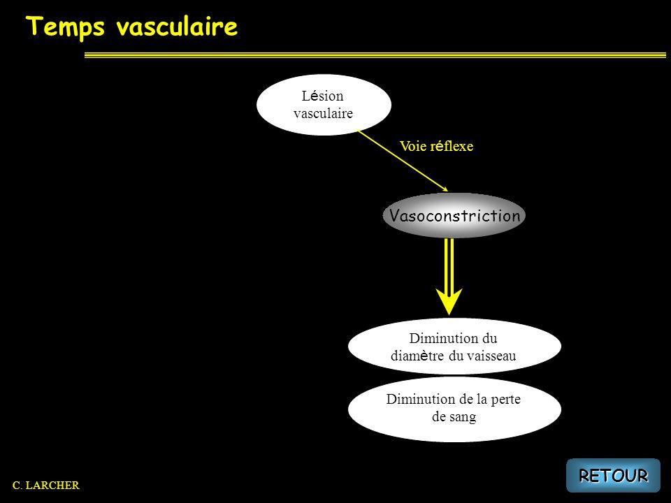 Temps vasculaire L é sion vasculaire Voie r é flexe Diminution du diam è tre du vaisseau Diminution de la perte de sang Vasoconstriction RETOUR C. LAR