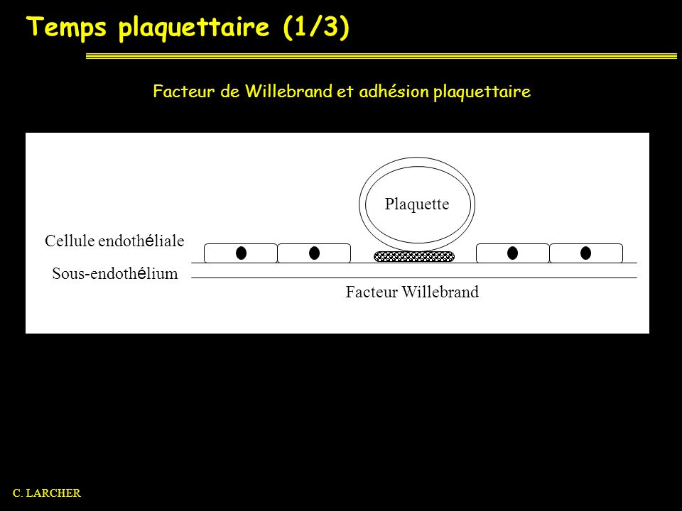 Temps plaquettaire (1/3) Sous-endoth é lium Cellule endoth é liale Facteur Willebrand Plaquette Facteur de Willebrand et adhésion plaquettaire C. LARC