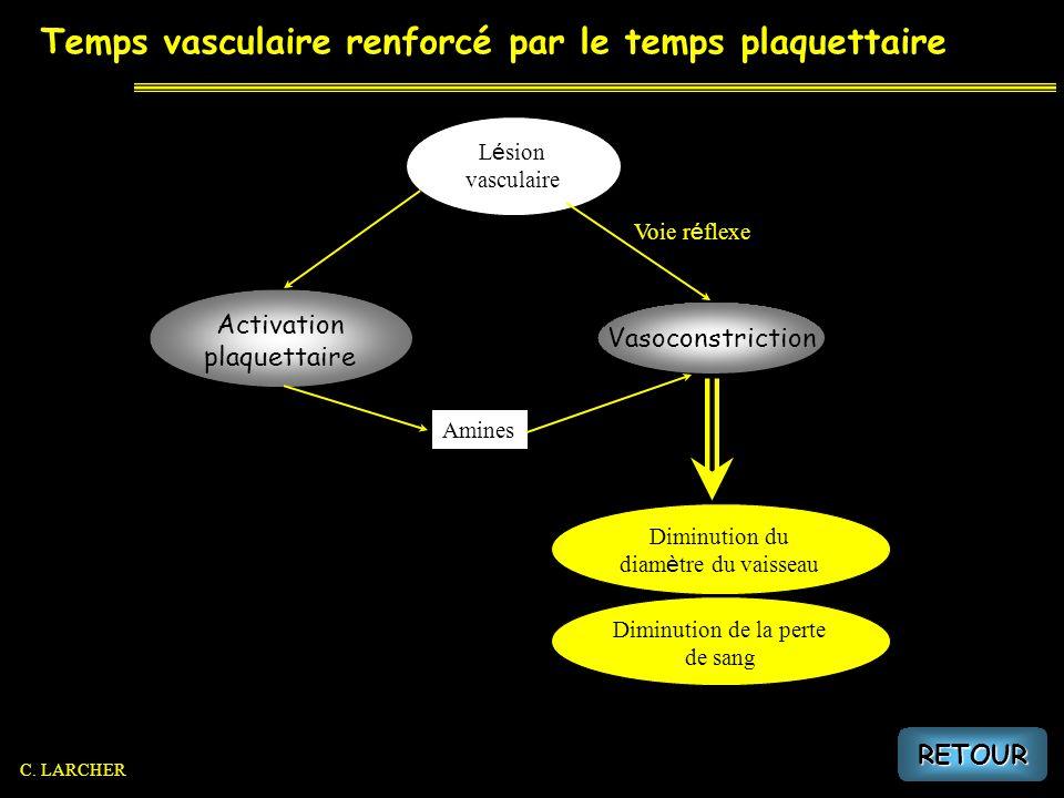 Temps vasculaire renforcé par le temps plaquettaire Diminution du diam è tre du vaisseau Diminution de la perte de sang L é sion vasculaire Voie r é f
