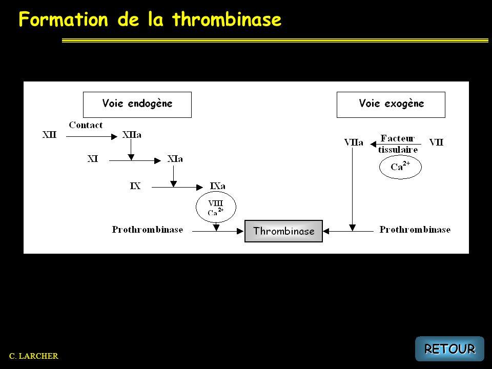 Formation de la thrombine RETOUR C. LARCHER