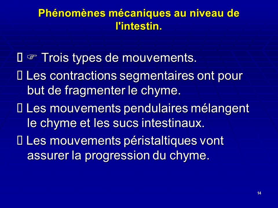 14 Phénomènes mécaniques au niveau de l'intestin. Trois types de mouvements. Trois types de mouvements. Les contractions segmentaires ont pour but de