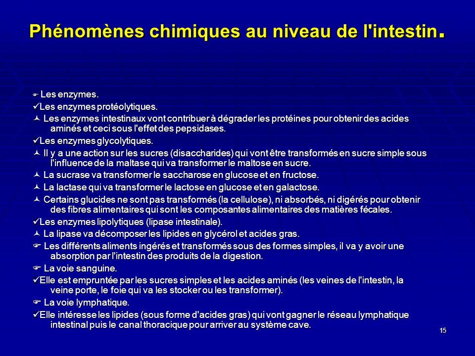 15 Phénomènes chimiques au niveau de l'intestin. Les enzymes. Les enzymes. Les enzymes protéolytiques. Les enzymes protéolytiques. Les enzymes intesti
