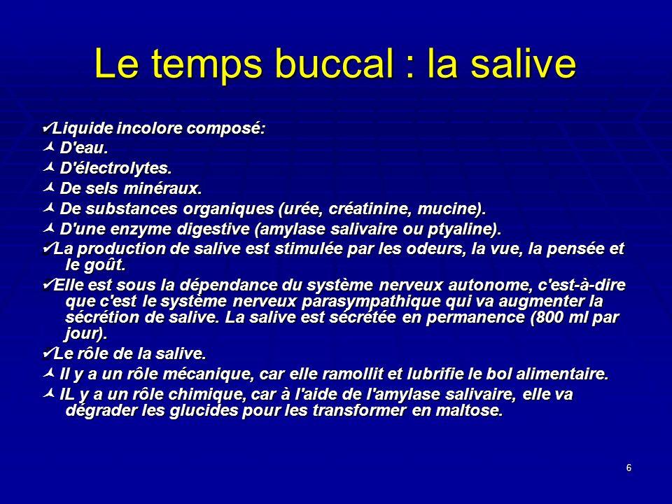 6 Le temps buccal : la salive Liquide incolore composé: Liquide incolore composé: D'eau. D'eau. D'électrolytes. D'électrolytes. De sels minéraux. De s