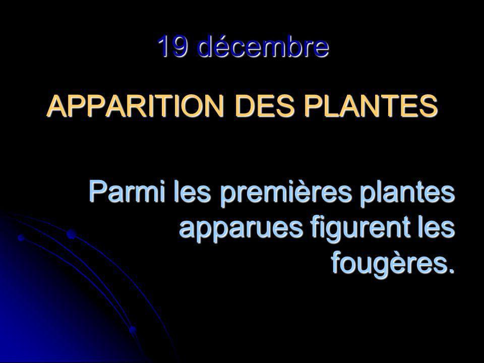 19 décembre APPARITION DES PLANTES Parmi les premières plantes apparues figurent les fougères.
