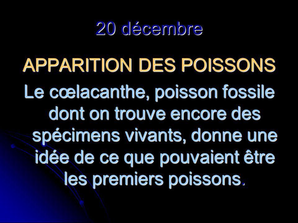 20 décembre APPARITION DES POISSONS Le cœlacanthe, poisson fossile dont on trouve encore des spécimens vivants, donne une idée de ce que pouvaient être les premiers poissons.