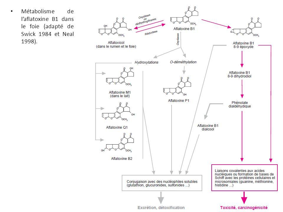 Métabolisme de laflatoxine B1 dans le foie (adapté de Swick 1984 et Neal 1998).