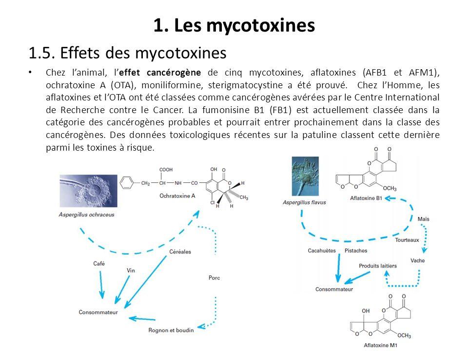 1. Les mycotoxines 1.5. Effets des mycotoxines Chez lanimal, leffet cancérogène de cinq mycotoxines, aflatoxines (AFB1 et AFM1), ochratoxine A (OTA),