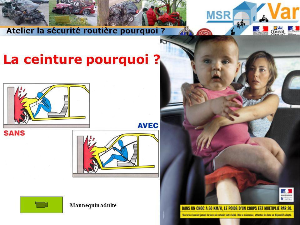 Quelle force à 50Km/h? La ceinture pourquoi ? Mannequin adulte Atelier la sécurité routière pourquoi ?