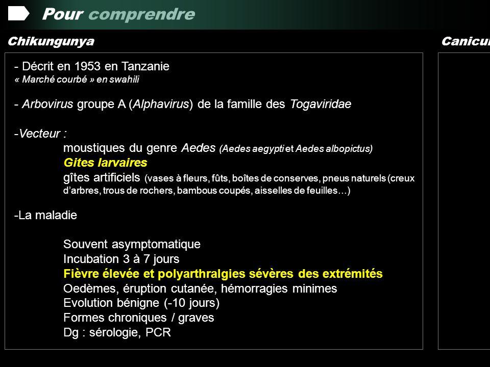 Pour comprendre Chikungunya Canicule - Décrit en 1953 en Tanzanie « Marché courbé » en swahili - Arbovirus groupe A (Alphavirus) de la famille des Togaviridae -Vecteur : moustiques du genre Aedes (Aedes aegypti et Aedes albopictus) Gites larvaires gîtes artificiels (vases à fleurs, fûts, boîtes de conserves, pneus naturels (creux darbres, trous de rochers, bambous coupés, aisselles de feuilles…) -La maladie Souvent asymptomatique Incubation 3 à 7 jours Fièvre élevée et polyarthralgies sévères des extrémités Oedèmes, éruption cutanée, hémorragies minimes Evolution bénigne (-10 jours) Formes chroniques / graves Dg : sérologie, PCR