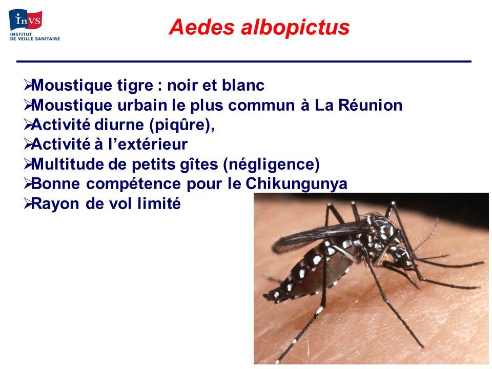 Aedes albopictus Moustique tigre : noir et blanc Moustique urbain le plus commun à La Réunion Activité diurne (piqûre), Activité à lextérieur Multitud