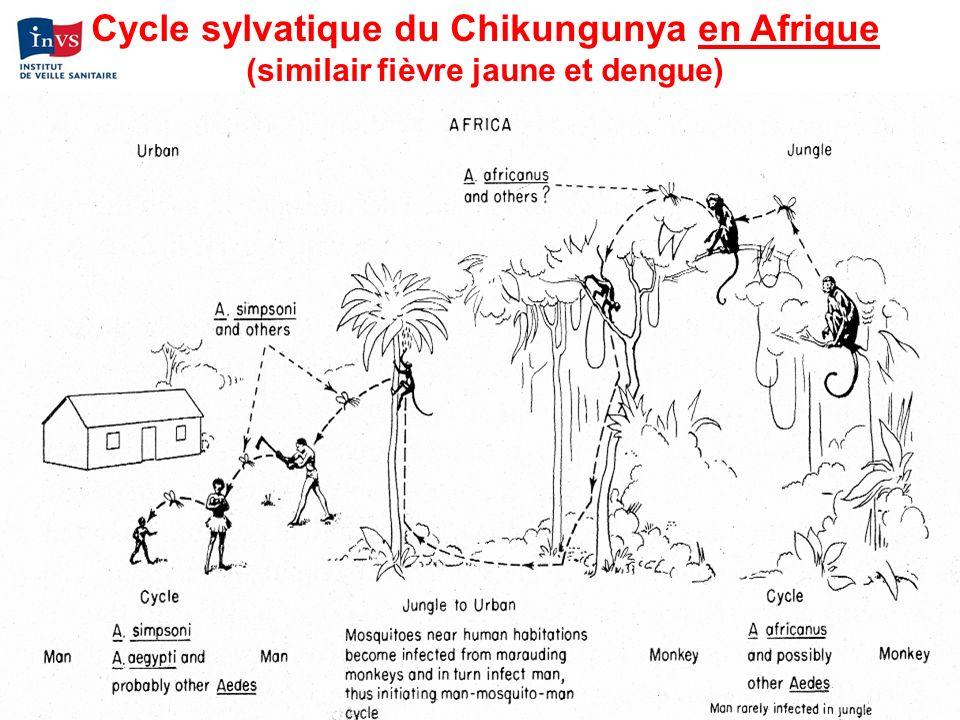 Cycle sylvatique du Chikungunya en Afrique (similair fièvre jaune et dengue)