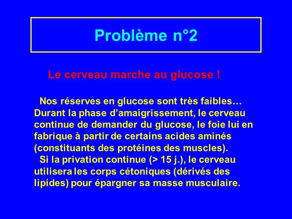 Problème n°2 Nos réserves en glucose sont très faibles… Durant la phase damaigrissement, le cerveau continue de demander du glucose, le foie lui en fabrique à partir de certains acides aminés (constituants des protéines des muscles).