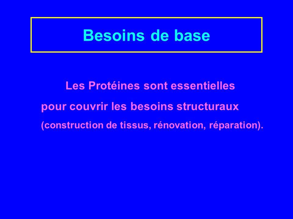 Les Protéines sont essentielles pour couvrir les besoins structuraux (construction de tissus, rénovation, réparation).