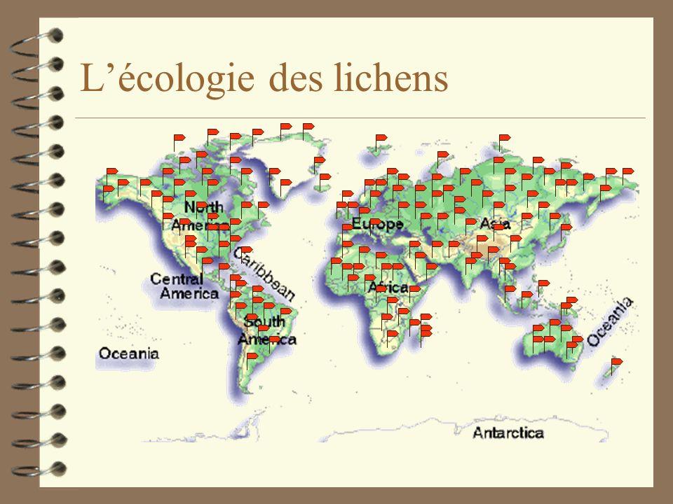 Les lichens et la pollution atmosphérique 4 Impact pollution sur lichens: Ratio surface/volume très élevé => absorption élevée des polluants gazeux et