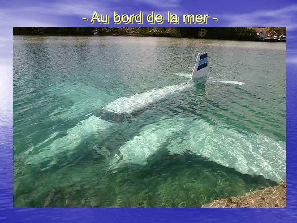 - Au bord de la mer -