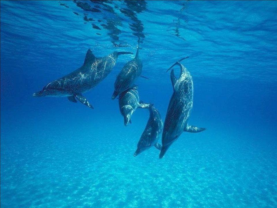 6 – Je nai pas vu les poissons qui vivaient dans les lacs et rivières. Les avez-vous donc tous pêchés ? Où sont-ils ??