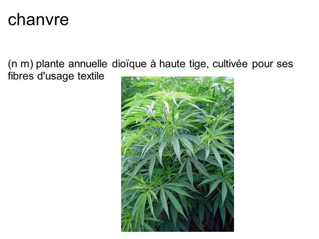 chanvre (n m) plante annuelle dioïque à haute tige, cultivée pour ses fibres d'usage textile