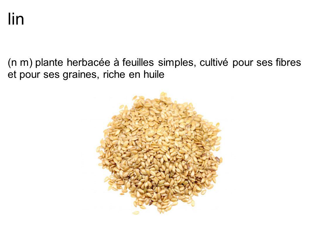 lin (n m) plante herbacée à feuilles simples, cultivé pour ses fibres et pour ses graines, riche en huile
