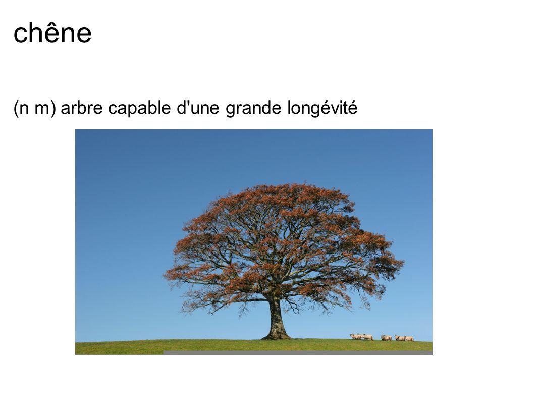 chêne (n m) arbre capable d'une grande longévité