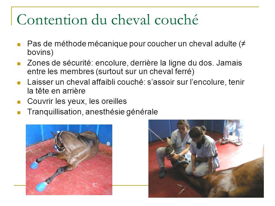 Contention du cheval couché Pas de méthode mécanique pour coucher un cheval adulte ( bovins) Zones de sécurité: encolure, derrière la ligne du dos. Ja