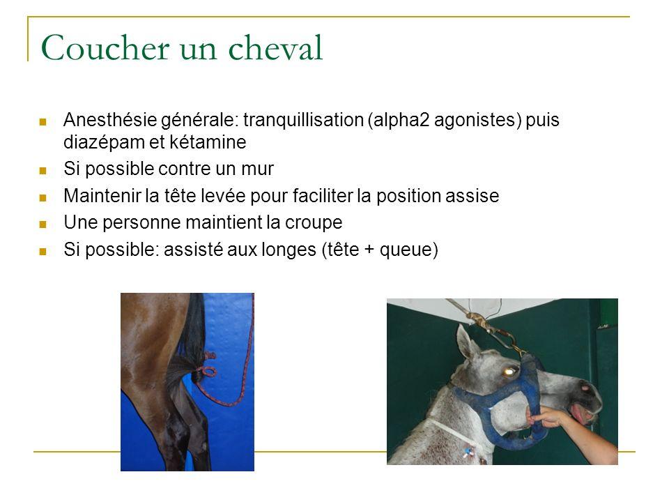 Coucher un cheval Anesthésie générale: tranquillisation (alpha2 agonistes) puis diazépam et kétamine Si possible contre un mur Maintenir la tête levée
