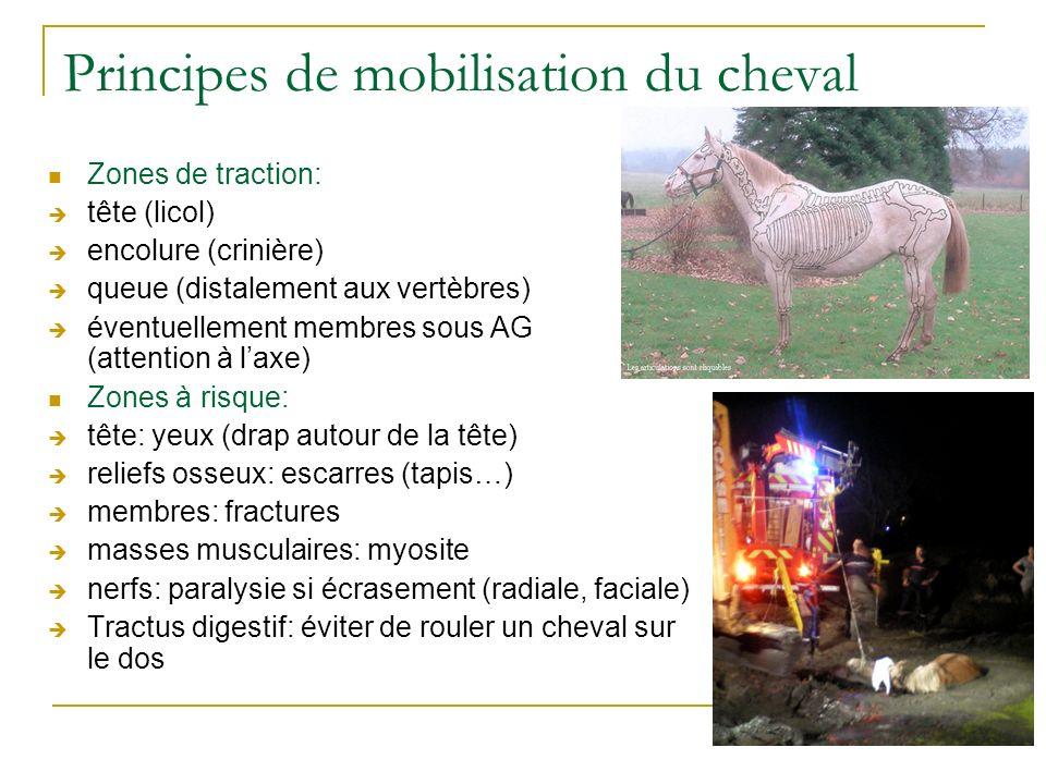 Principes de mobilisation du cheval Zones de traction: tête (licol) encolure (crinière) queue (distalement aux vertèbres) éventuellement membres sous