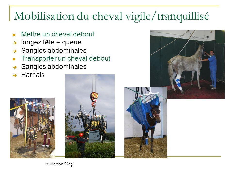 Mobilisation du cheval vigile/tranquillisé Mettre un cheval debout longes tête + queue Sangles abdominales Transporter un cheval debout Sangles abdomi