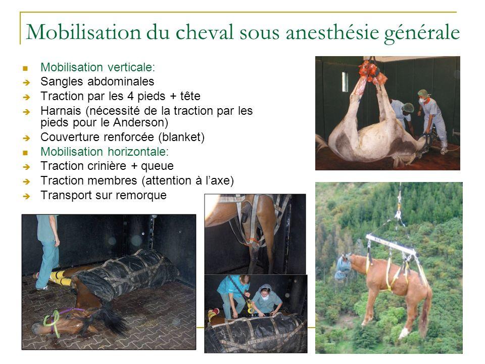 Mobilisation du cheval sous anesthésie générale Mobilisation verticale: Sangles abdominales Traction par les 4 pieds + tête Harnais (nécessité de la t