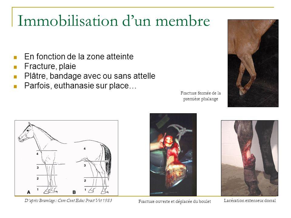 Immobilisation dun membre En fonction de la zone atteinte Fracture, plaie Plâtre, bandage avec ou sans attelle Parfois, euthanasie sur place… Daprès B