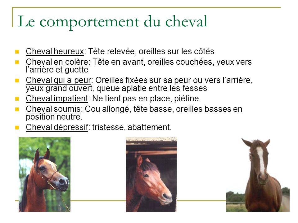 Le comportement du cheval Cheval heureux: Tête relevée, oreilles sur les côtés Cheval en colère: Tête en avant, oreilles couchées, yeux vers larrière