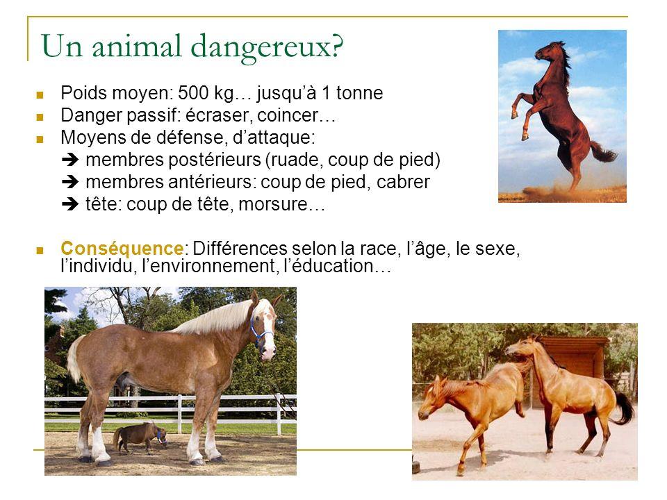 AM 04/09 Lanatomie du cheval Lavant-main
