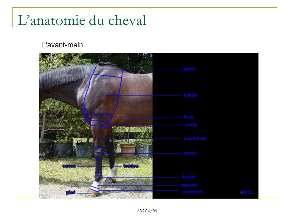 AM 04/09 Le corps Lanatomie du cheval