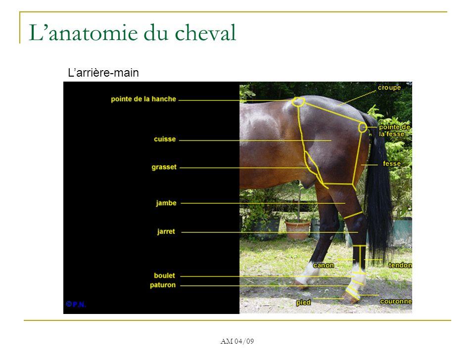 AM 04/09 Lanatomie du cheval Larrière-main