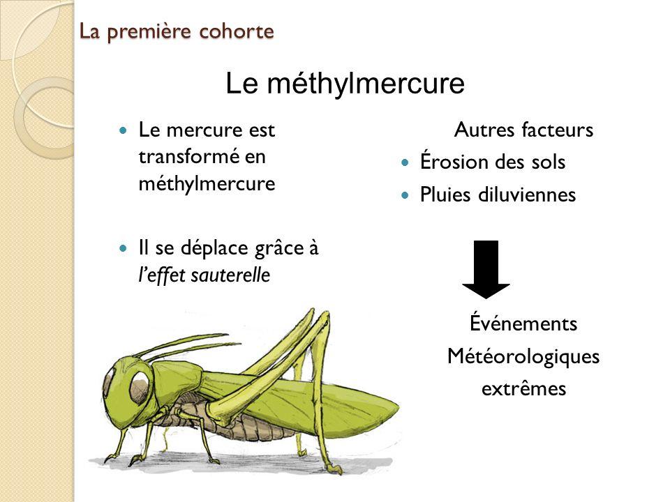 La première cohorte Le mercure est transformé en méthylmercure Il se déplace grâce à leffet sauterelle Autres facteurs Érosion des sols Pluies diluvie