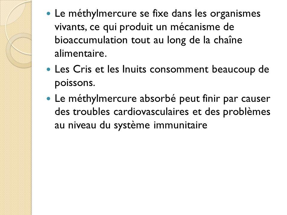 Le méthylmercure se fixe dans les organismes vivants, ce qui produit un mécanisme de bioaccumulation tout au long de la chaîne alimentaire. Les Cris e