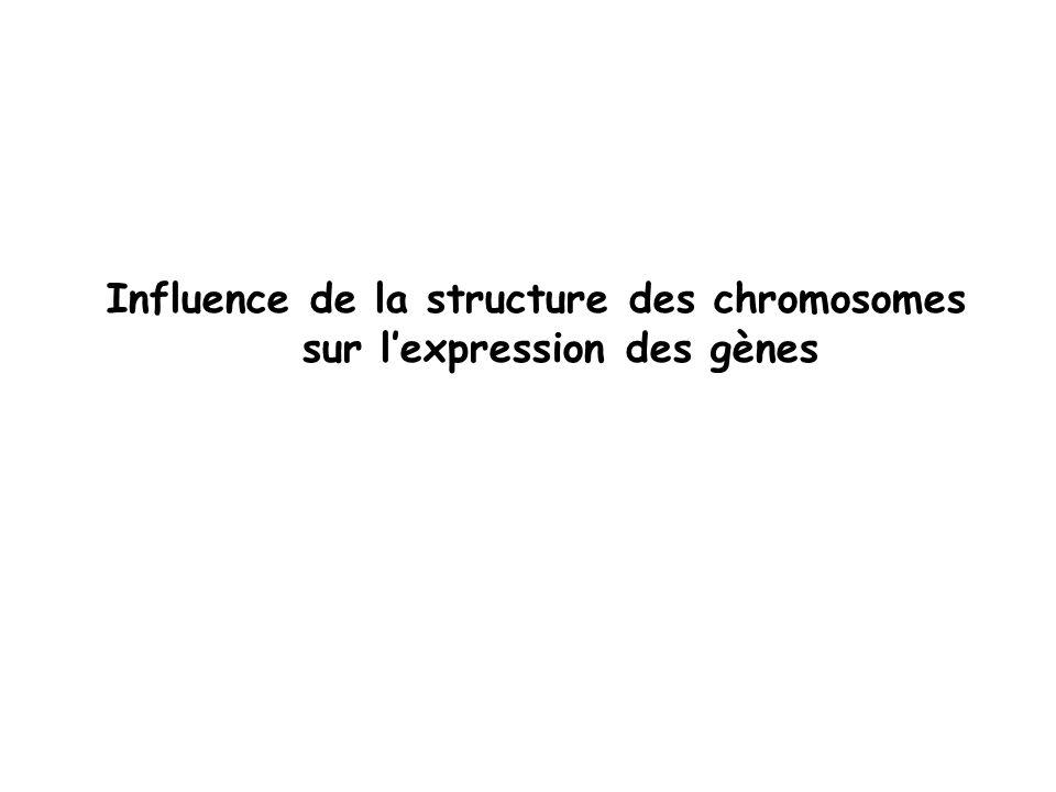 Influence de la structure des chromosomes sur lexpression des gènes