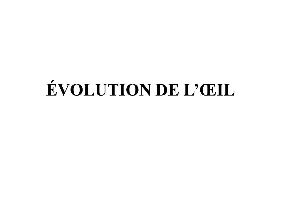 ÉVOLUTION DE LŒIL