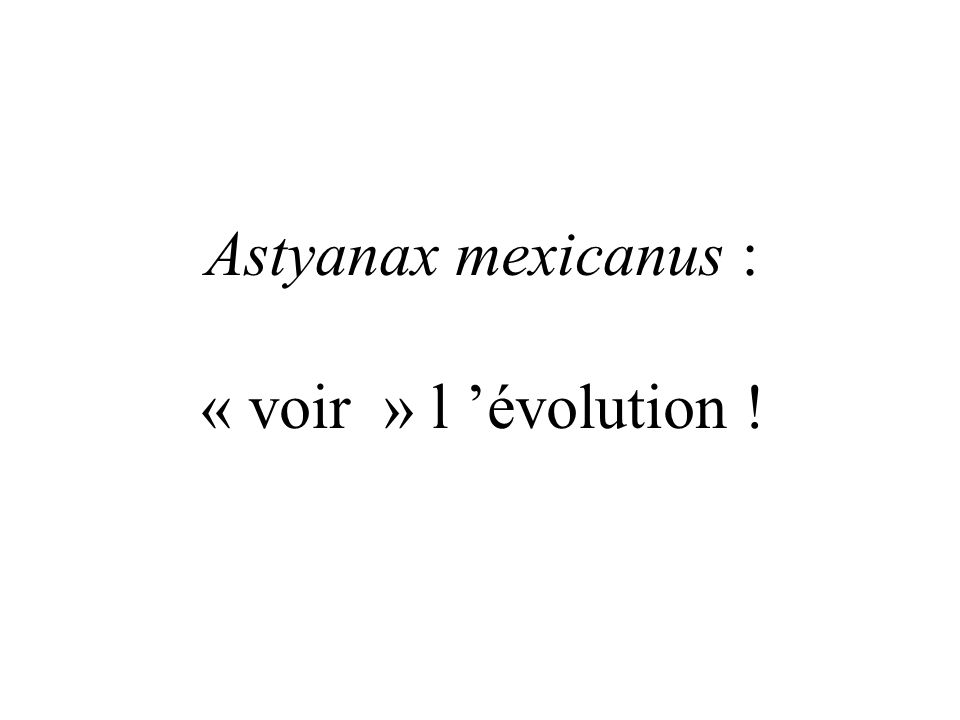 Astyanax mexicanus : « voir » l évolution !