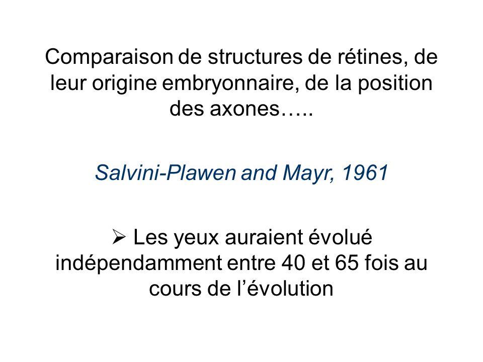 Comparaison de structures de rétines, de leur origine embryonnaire, de la position des axones…..