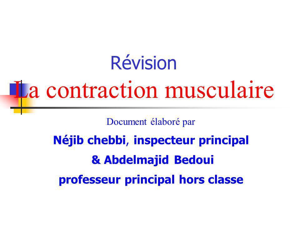 Révision La contraction musculaire Document élaboré par Néjib chebbi, inspecteur principal & Abdelmajid Bedoui professeur principal hors classe