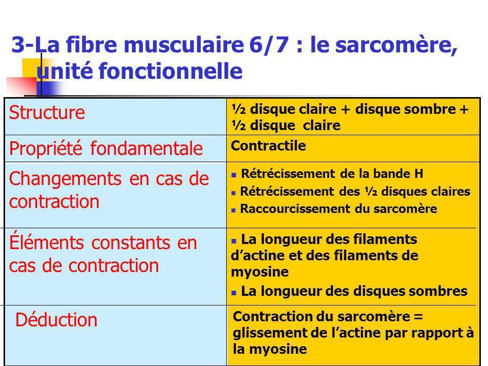 3-La fibre musculaire 6/7 : le sarcomère, unité fonctionnelle La longueur des filaments dactine et des filaments de myosine La longueur des disques sombres Éléments constants en cas de contraction Contraction du sarcomère = glissement de lactine par rapport à la myosine Déduction Rétrécissement de la bande H Rétrécissement des ½ disques claires Raccourcissement du sarcomère Changements en cas de contraction Contractile Propriété fondamentale ½ disque claire + disque sombre + ½ disque claire Structure