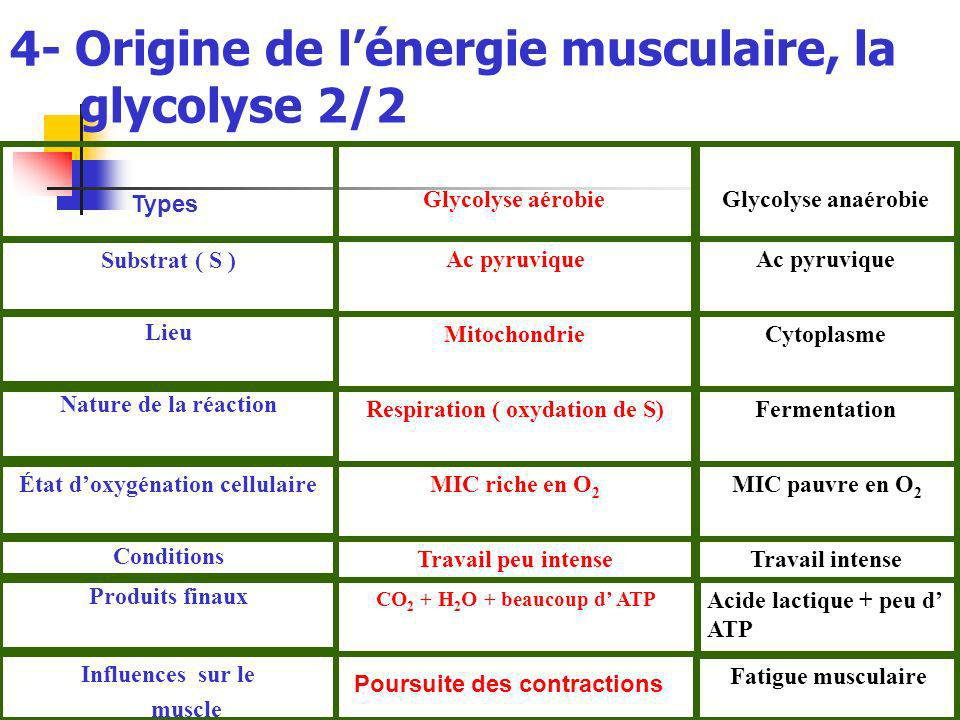 4- Origine de lénergie musculaire, la glycolyse 2/2 Fatigue musculaire Influences sur le muscle Acide lactique + peu d ATP CO 2 + H 2 O + beaucoup d A