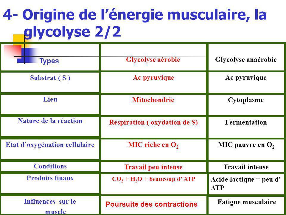 4- Origine de lénergie musculaire, la glycolyse 2/2 Fatigue musculaire Influences sur le muscle Acide lactique + peu d ATP CO 2 + H 2 O + beaucoup d ATP Produits finaux Travail intenseTravail peu intense Conditions MIC pauvre en O 2 MIC riche en O 2 État doxygénation cellulaire FermentationRespiration ( oxydation de S) Nature de la réaction CytoplasmeMitochondrie Lieu Ac pyruvique Substrat ( S ) Glycolyse anaérobieGlycolyse aérobie Poursuite des contractions Types