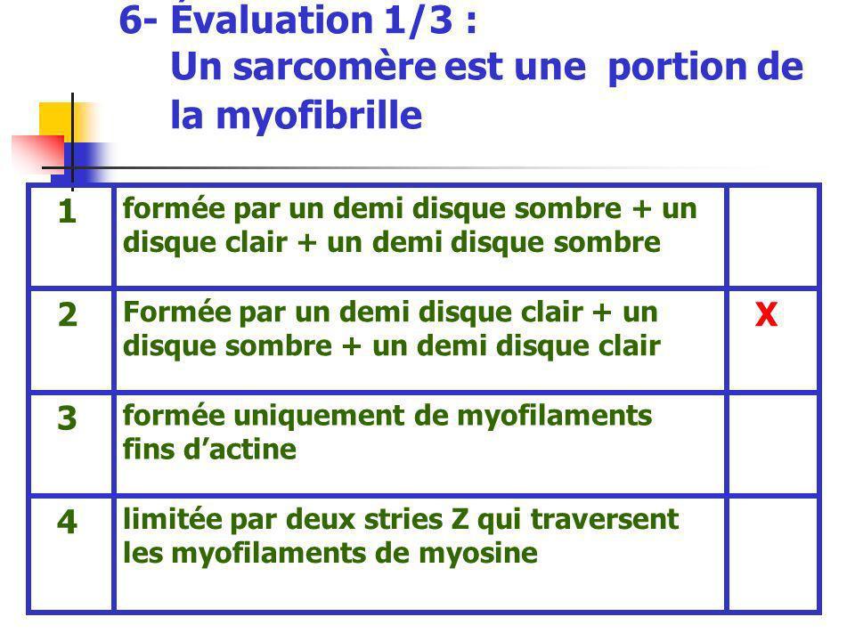6- Évaluation 1/3 : Un sarcomère est une portion de la myofibrille limitée par deux stries Z qui traversent les myofilaments de myosine 4 formée uniqu